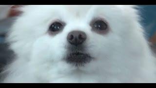 Historia Memów - Gabe The Dog