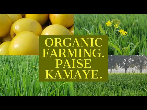 Organic Farming | Business Idea for Start ups | New Age Farmers