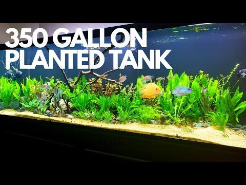 planting-monster-350-gallon-tank,-adding-100-plants