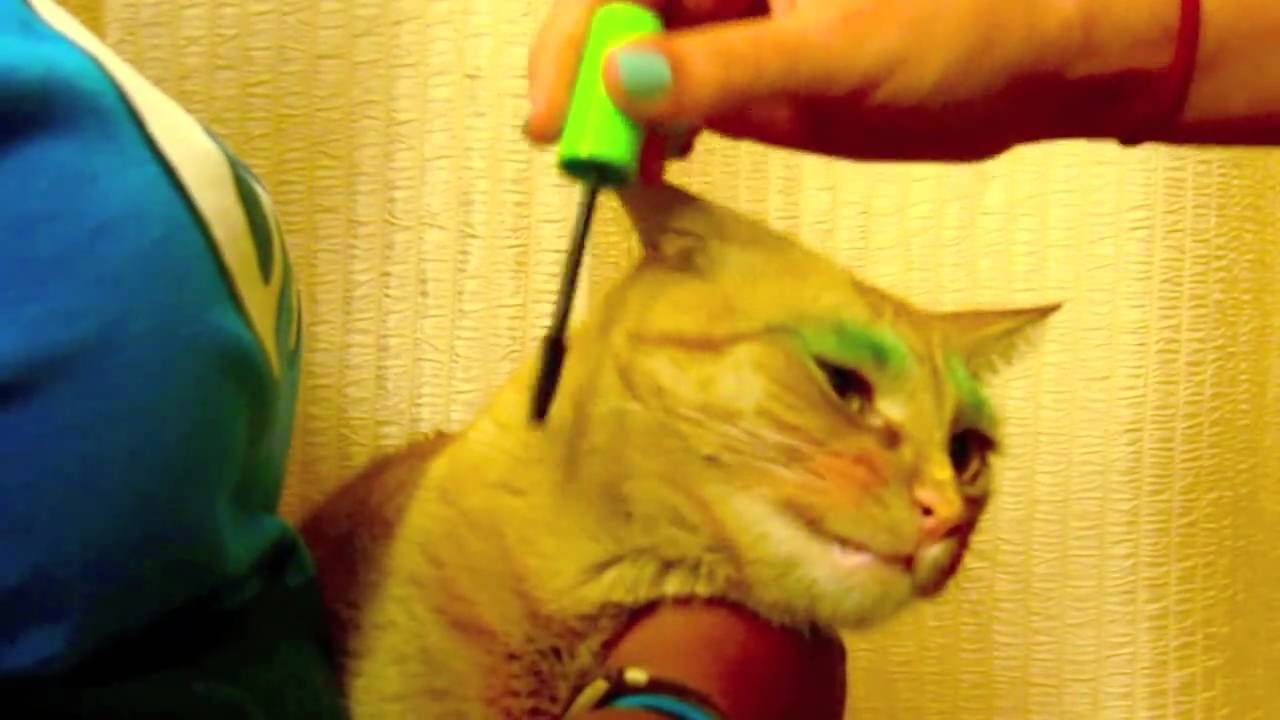 makeup for cats