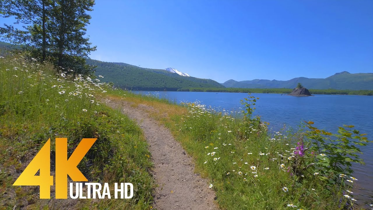 4k nature walk 4 5 hrs forest river fabulous views with calm music