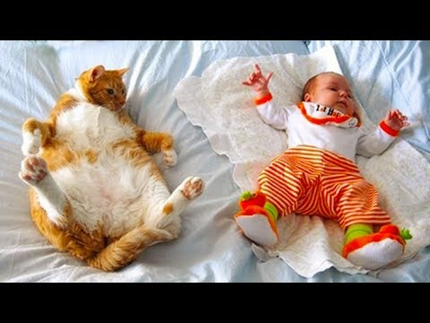 Funny Cats Meeting Newborn Babies   Funny Pets Video Compilation