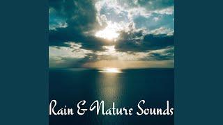 Quiet Rain Shower