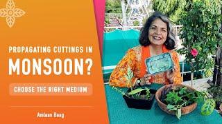Propagating Cuttings in Monsoon? Choose The Right Medium | कटिंग से जल्दी पौधा बनाने की तरकीब