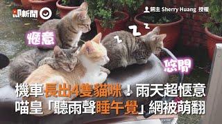 機車長出4隻貓 聽雨聲睡午覺 網友被萌翻:超療癒|寵物
