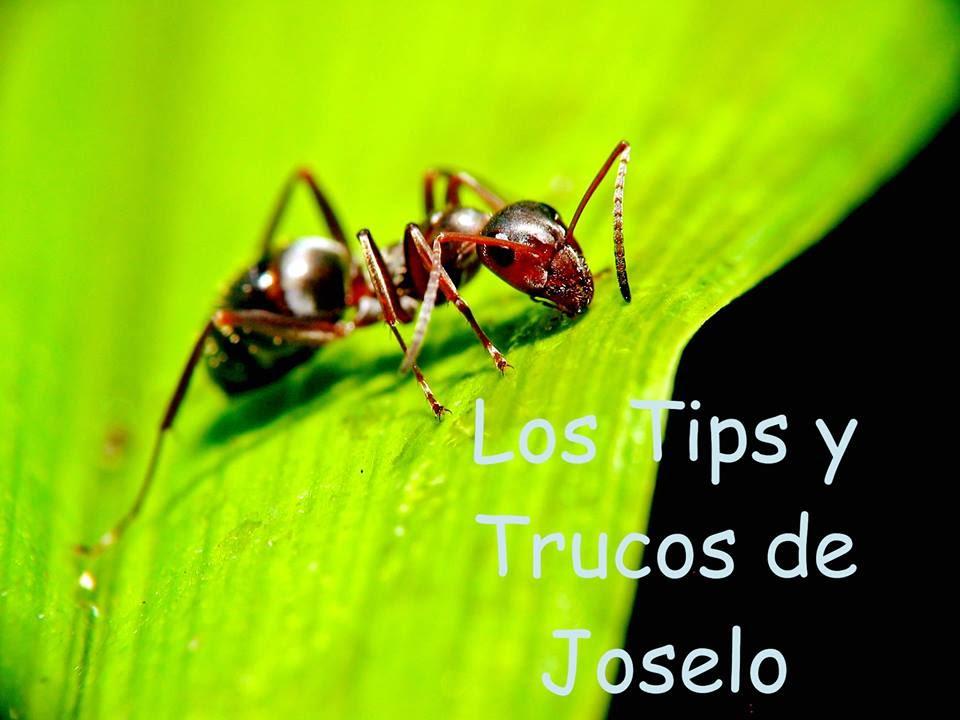 Como acabar con las hormigas en casa canela en polvo y - Como terminar con las hormigas en casa ...