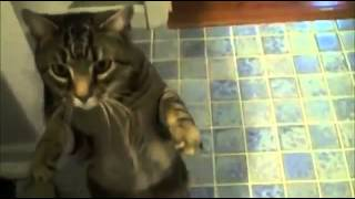 The Most Obedient Cat Ever - Funny Video