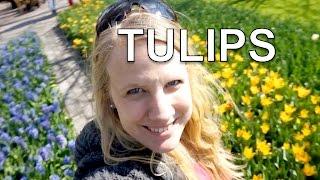 Amsterdam: Keukenhof Flower Garden and Flowe Fields   Travel Vlog