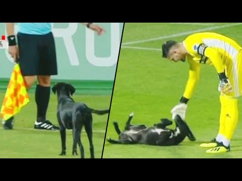 Playful Stray Dog Interrupts Professional Soccer Game in Georgia