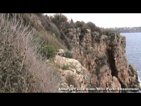 Antalya Falez Alanı Milli Parkı Ekosistemi - Antalya Travertine Field National Park Ecosystem