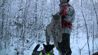 Taiga Star hunting videos, showreel 2012