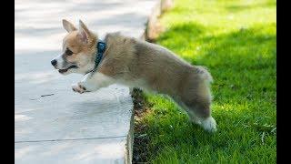 Bate papo sobre comportamento canino, trabalho com cães e novidades.