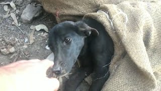 Dog Beaten up and left to Die | Wildly Indian