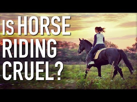 Is Horse Riding Cruel? Is It Vegan?