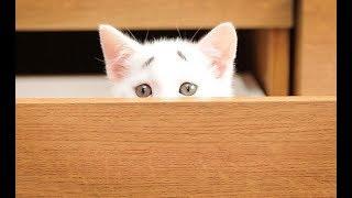 permanently worried looking kitten breaks the internet with his eyebrows