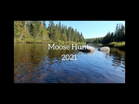 New Brunswick Moose Hunt 2021 turn volumn way up for bull grunts!!!!!