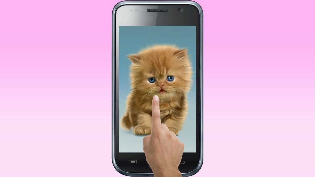 baby cat, cute live wallpaper - youtube