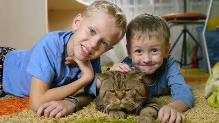 CAT HOME BACK HOME Surprise for children Reaction to a cat