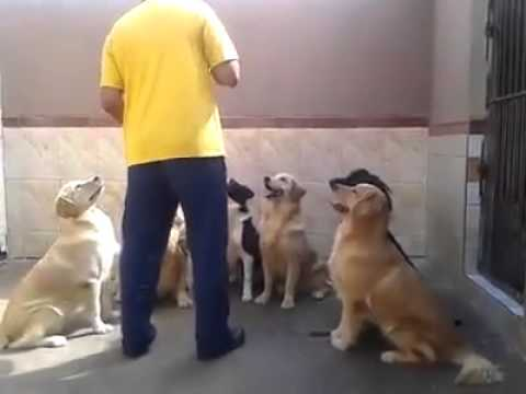 Remarkably Obedient Dogs Wait For Owners Command