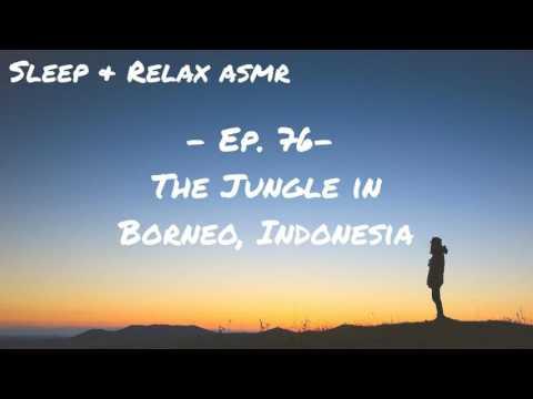 The Jungle in Borneo, Indonesia