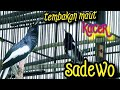 Tembakan Maut Kacer Sadewo  Mp3 - Mp4 Download