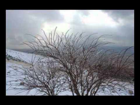 Piramerd - kurdy rawan
