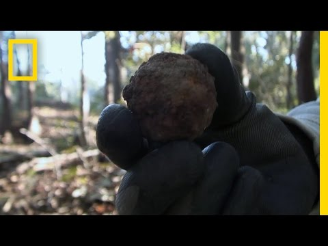 Civil War Roundness | National Geographic