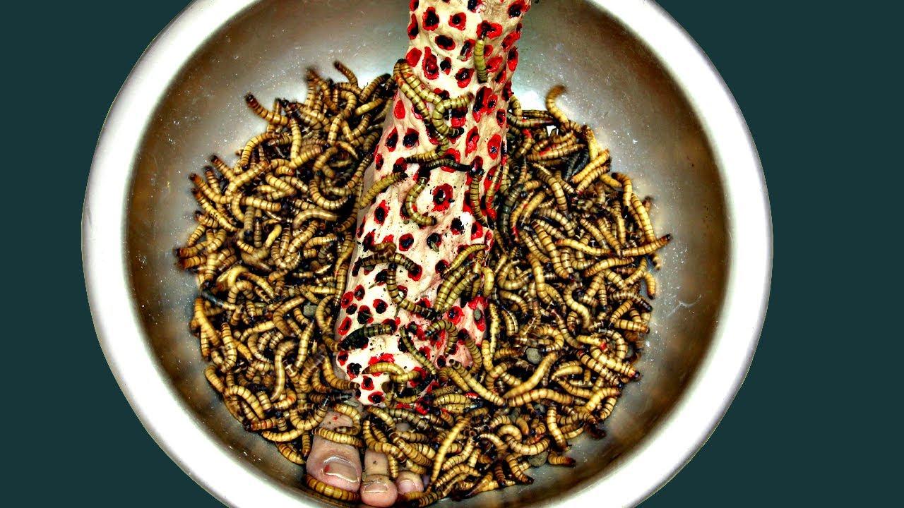Download HORROR COOKING - Making SUPER BOWL of Meal WORMS CENTIPEDE  ASMR 4K