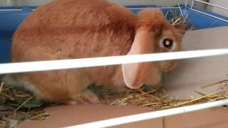 Почему нельзя заводить домашних кроликов?