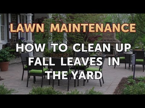 How to Clean Up Fall Leaves in the Yard