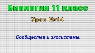 Биология 11 класс (Урок№14 - Сообщества и экосистемы.)