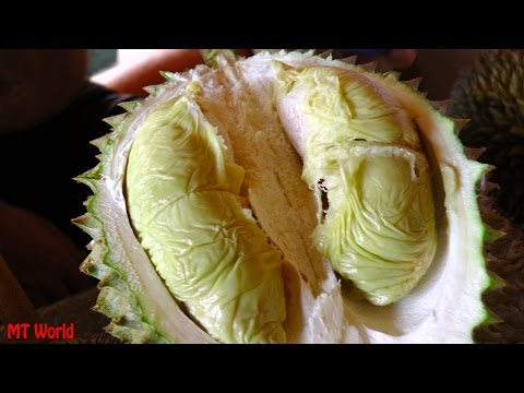 Bao Sheng Durian Farm Penang, How to pick and choose the best Durian