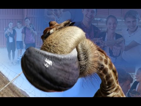 GIRAFFE LICKED MY CAMERA!? - Meeting gamer's in real life - Cape Town