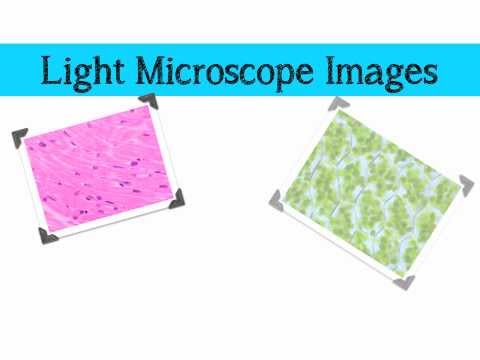 Comparing Microscopes