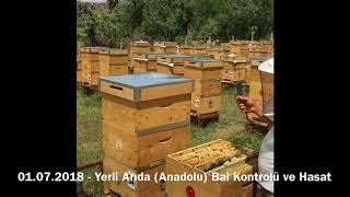 01.07.2018 - Yerli Arıda Bal Kontrolü ve Hasat
