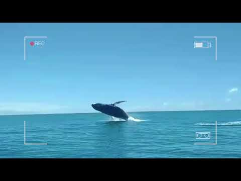 Turismo de Observação de Baleias - Porto Seguro - Bahia - Brasil