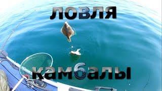 Ловля камбалы во Владивостоке приморский край 2019