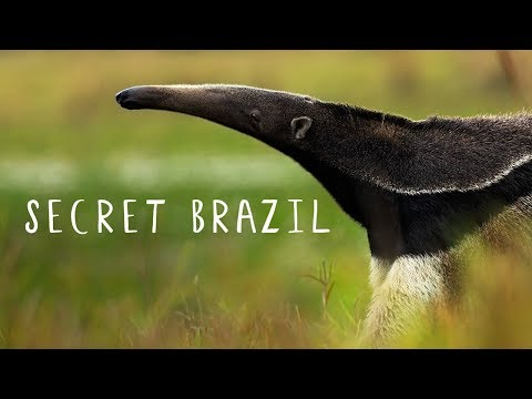 Secret Brazil: Wild Pantanal [National Geographic Documentary HD 2017]
