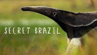Secret Brazil: Wild Pantanal - National Geographic