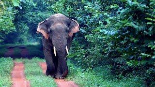 CHANDAKA Wildlife Sanctuary