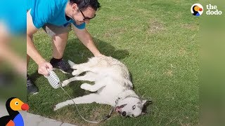 Stubborn Dog Refuses To Leave the Park | The Dodo
