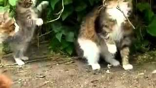 Кошки танцуют! Funny cats Cats are dancing! Cats jumping Reservoir Cats