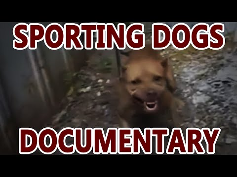 Sporting Dogs (pit bull documentary)