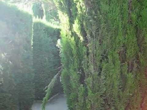 גן במבנה של מבוך - ברצלונה