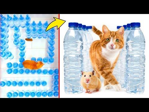 Хомяк против кота: Челлендж с лабиринтом из бутылок с водой