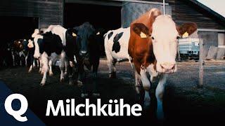 Kuhhaltung – Wie wir an unsere Milch kommen (Ganze Folge) I Quarks
