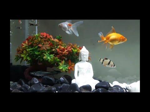 Aquarium Setup - Black & White Theme
