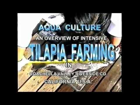 Complete video of Intensive Culture System in Aqua Farming.