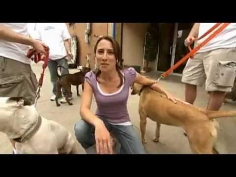 Volunteering at BARC no-kill animal shelter