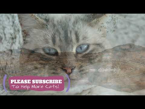 Relaxing Cat Music - 1 Hours Calming Tunes for Your Kitty ☯LCZ64